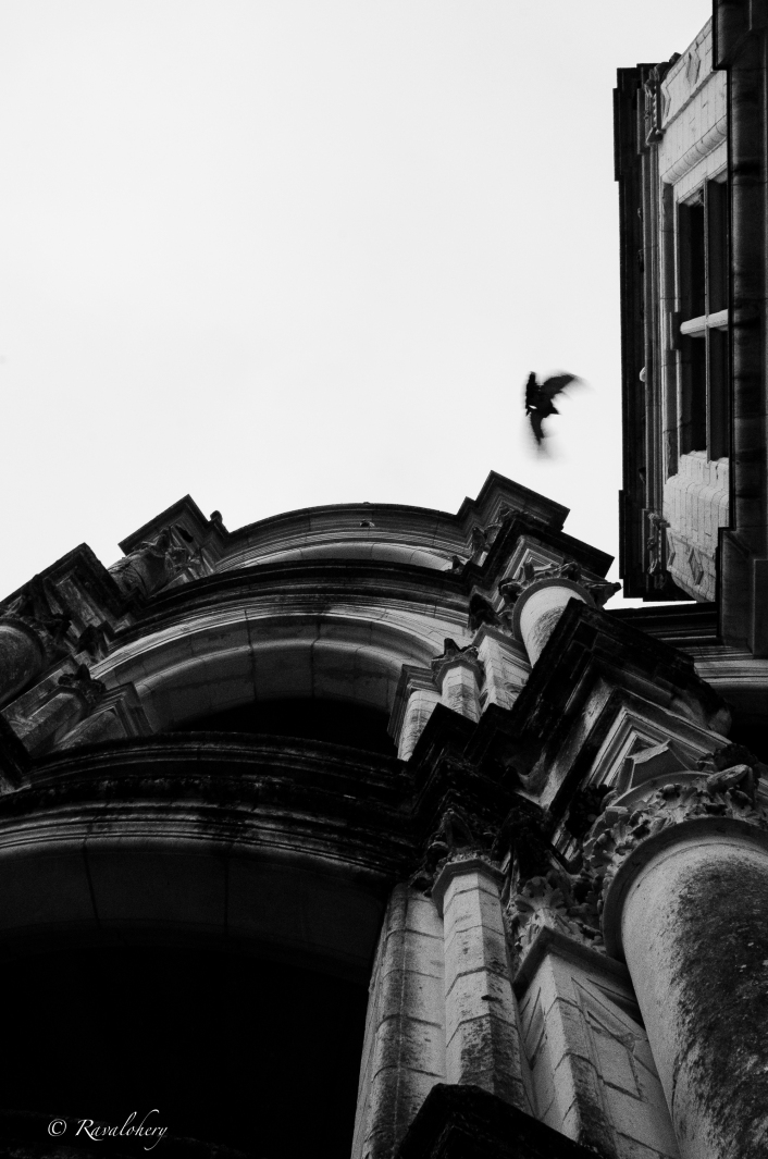 Un endroit pour les pigeons